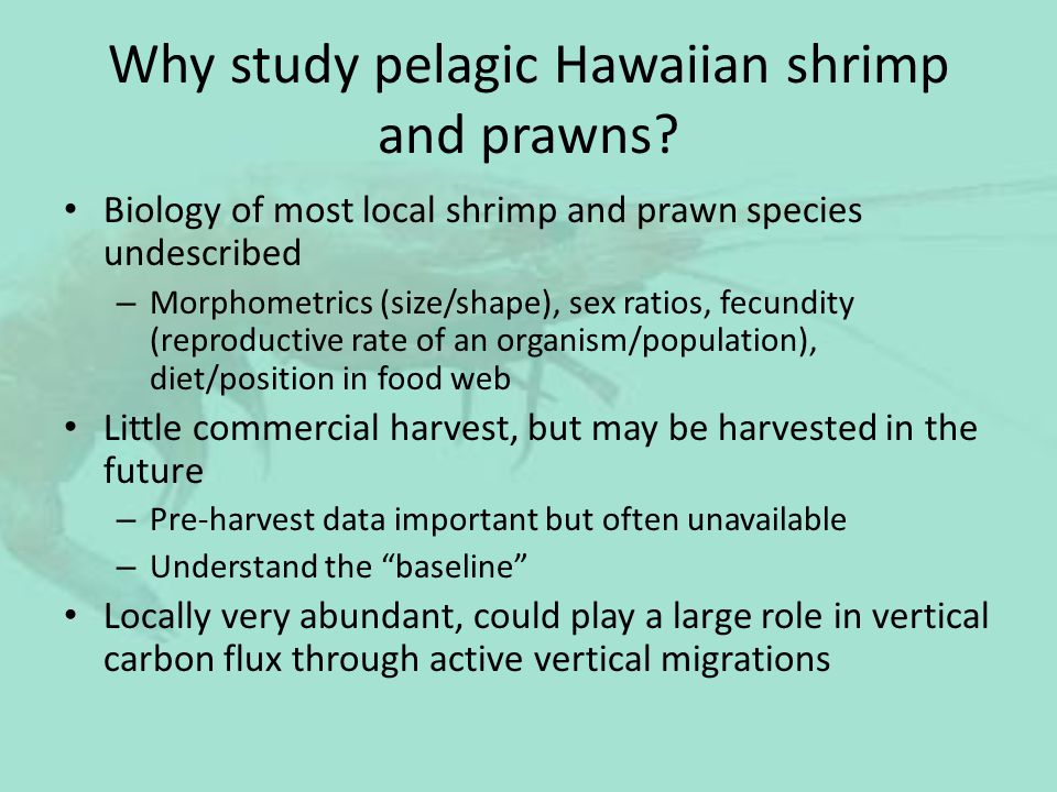 Why study pelagic Hawaiian shrimp and prawns? Biology of most local shrimp and prawn species undescribed – Morphometrics (size/shape), sex ratios, fec
