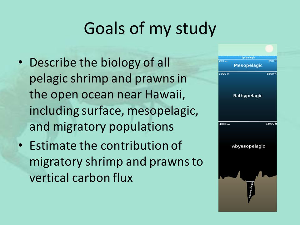 Goals of my study Describe the biology of all pelagic shrimp and prawns in the open ocean near Hawaii, including surface, mesopelagic, and migratory p