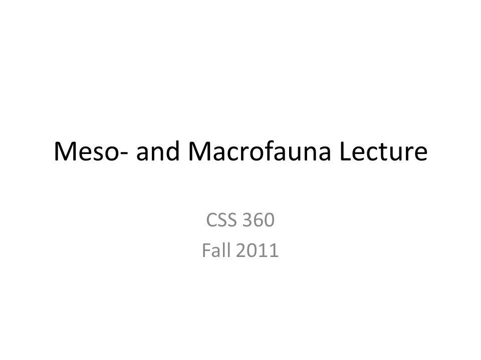 Meso- and Macrofauna Lecture CSS 360 Fall 2011