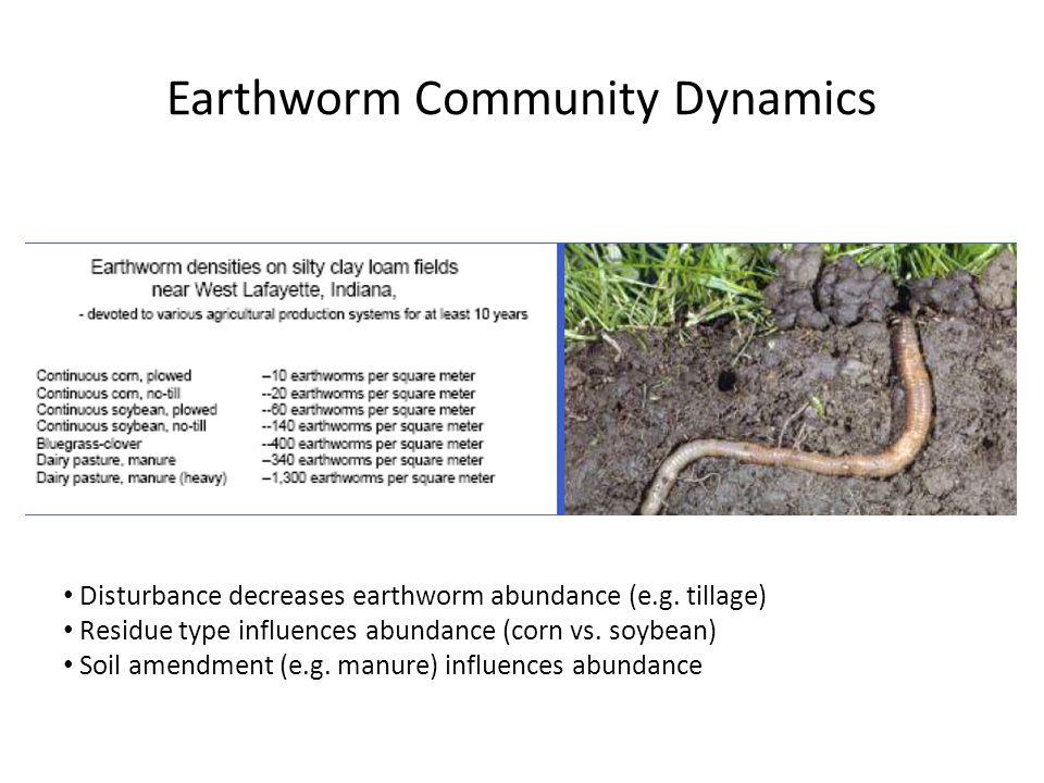 Earthworm Community Dynamics Disturbance decreases earthworm abundance (e.g. tillage) Residue type influences abundance (corn vs. soybean) Soil amendm