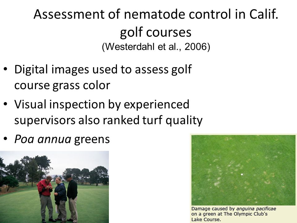 Assessment of nematode control in Calif. golf courses (Westerdahl et al., 2006) Digital images used to assess golf course grass color Visual inspectio
