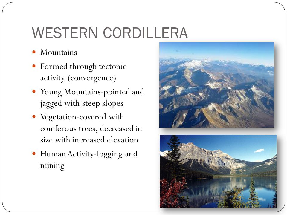 WESTERN CORDILLERA Mountains Formed through tectonic activity (convergence) Young Mountains-pointed and jagged with steep slopes Vegetation-covered with coniferous trees, decreased in size with increased elevation Human Activity-logging and mining