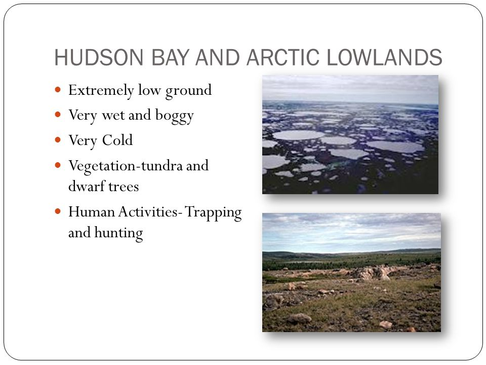 HUDSON BAY AND ARCTIC LOWLANDS Extremely low ground Very wet and boggy Very Cold Vegetation-tundra and dwarf trees Human Activities- Trapping and hunting