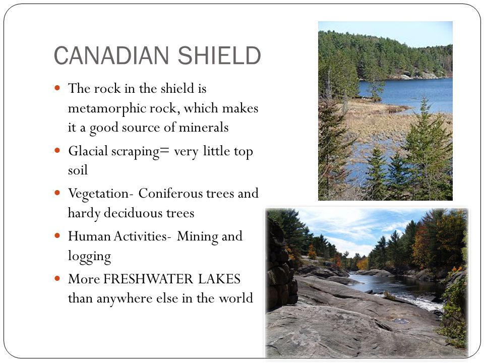 CANADIAN SHIELD The rock in the shield is metamorphic rock, which makes it a good source of minerals Glacial scraping= very little top soil Vegetation- Coniferous trees and hardy deciduous trees Human Activities- Mining and logging More FRESHWATER LAKES than anywhere else in the world