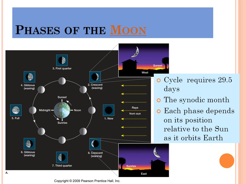P HASES OF THE M OONM OON Cycle requires 29.5 days The synodic month Each phase depends on its position relative to the Sun as it orbits Earth