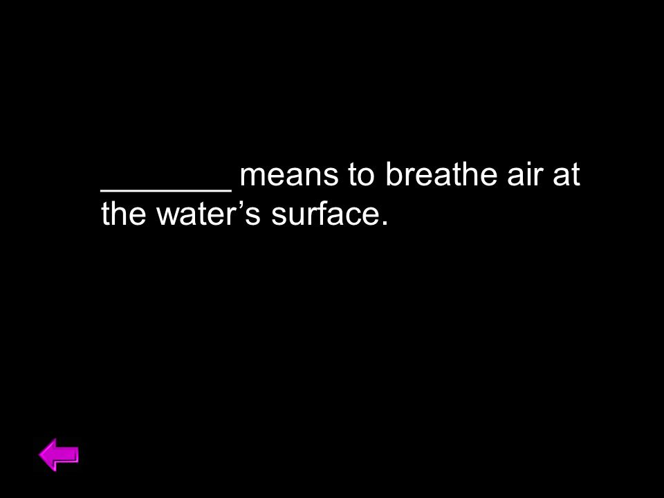 _______ means to breathe air at the water's surface. Burble