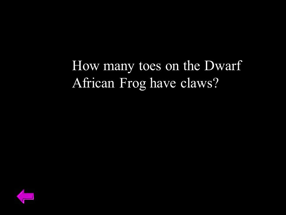 How many toes on the Dwarf African Frog have claws? Three toes