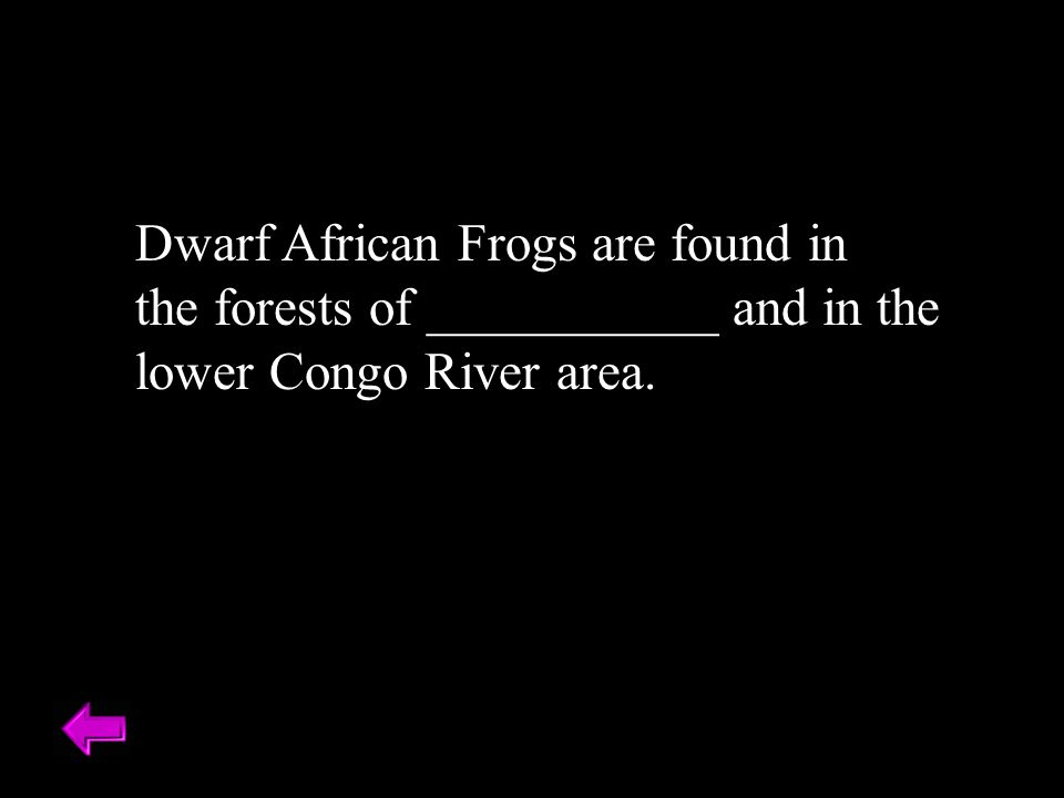 Dwarf African Frogs are found in the forests of ___________ and in the lower Congo River area. Zaire