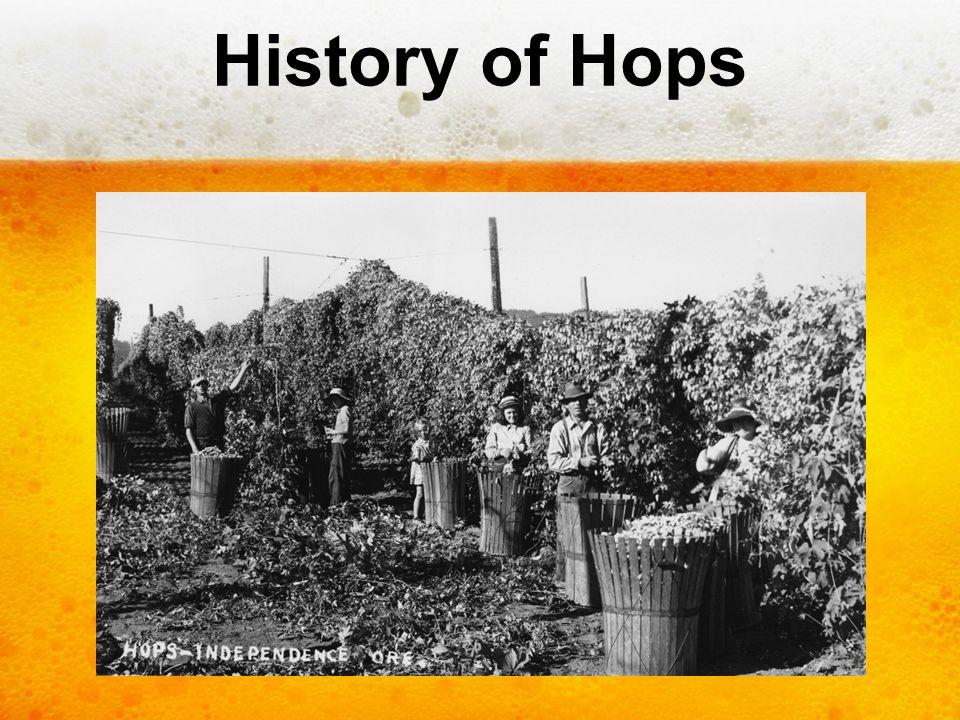 History of Hops