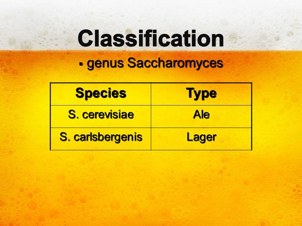  genus Saccharomyces SpeciesType S. cerevisiae Ale S. carlsbergenis Lager
