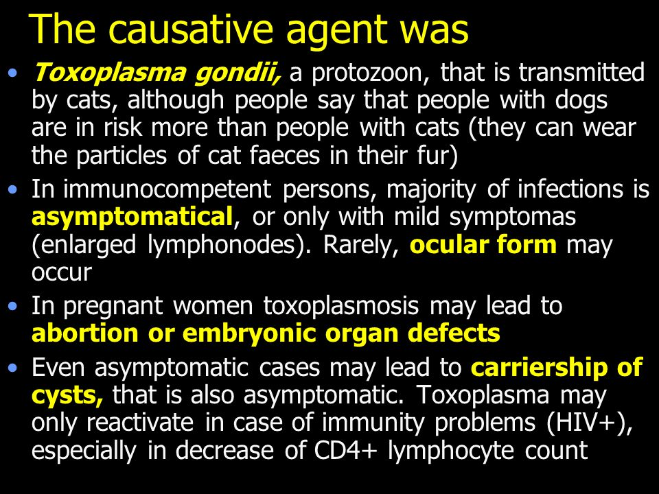 The causative agent was Toxoplasma gondii, a protozoon, that is transmitted by cats, although people say that people with dogs are in risk more than people with cats (they can wear the particles of cat faeces in their fur) In immunocompetent persons, majority of infections is asymptomatical, or only with mild symptomas (enlarged lymphonodes).