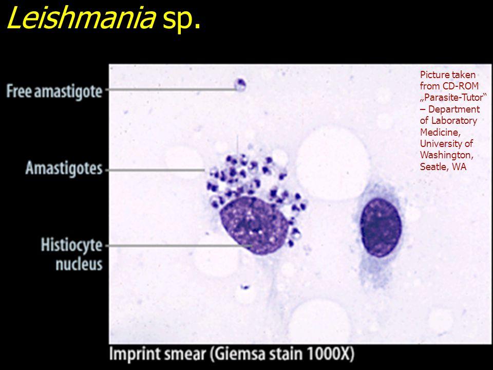 Leishmania sp.