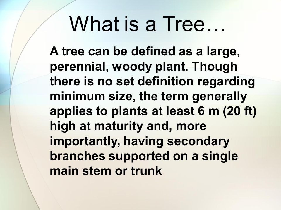 A tree can be defined as a large, perennial, woody plant. Though there is no set definition regarding minimum size, the term generally applies to plan