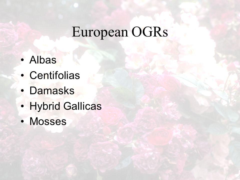 European OGRs Albas Centifolias Damasks Hybrid Gallicas Mosses
