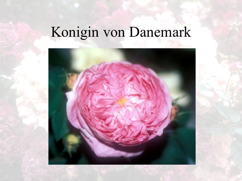 Konigin von Danemark