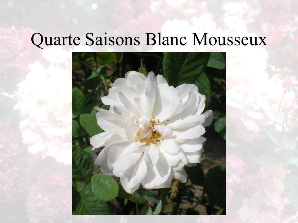 Quarte Saisons Blanc Mousseux