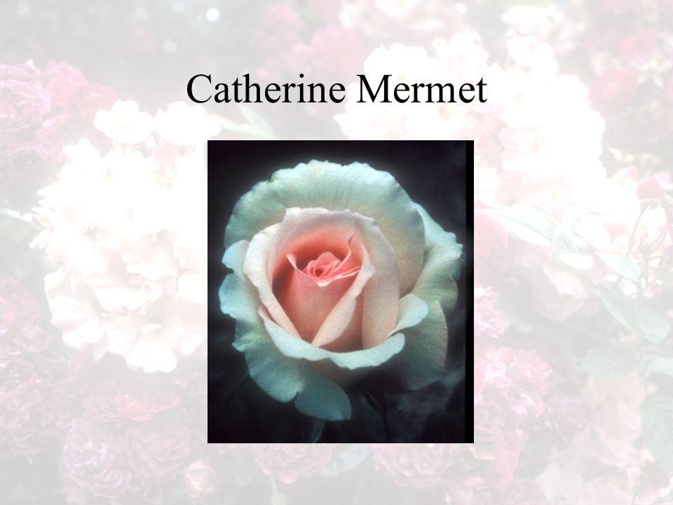 Catherine Mermet
