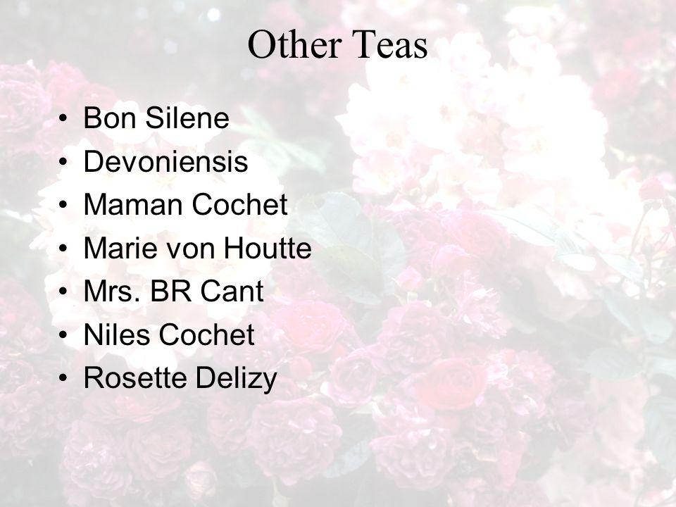 Other Teas Bon Silene Devoniensis Maman Cochet Marie von Houtte Mrs. BR Cant Niles Cochet Rosette Delizy