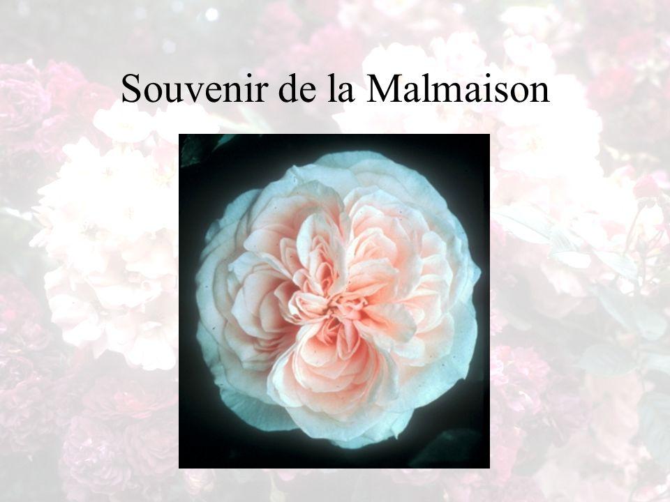 Souvenir de la Malmaison