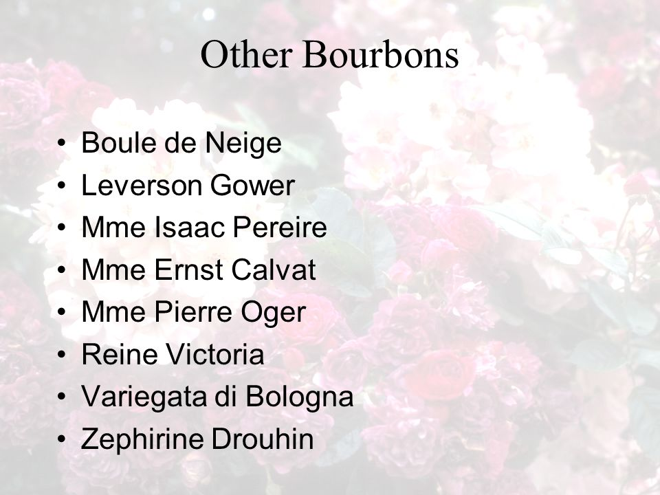 Other Bourbons Boule de Neige Leverson Gower Mme Isaac Pereire Mme Ernst Calvat Mme Pierre Oger Reine Victoria Variegata di Bologna Zephirine Drouhin