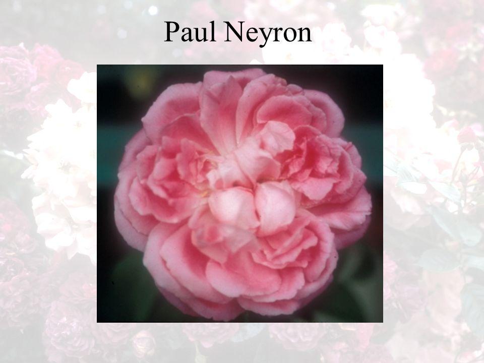 Paul Neyron