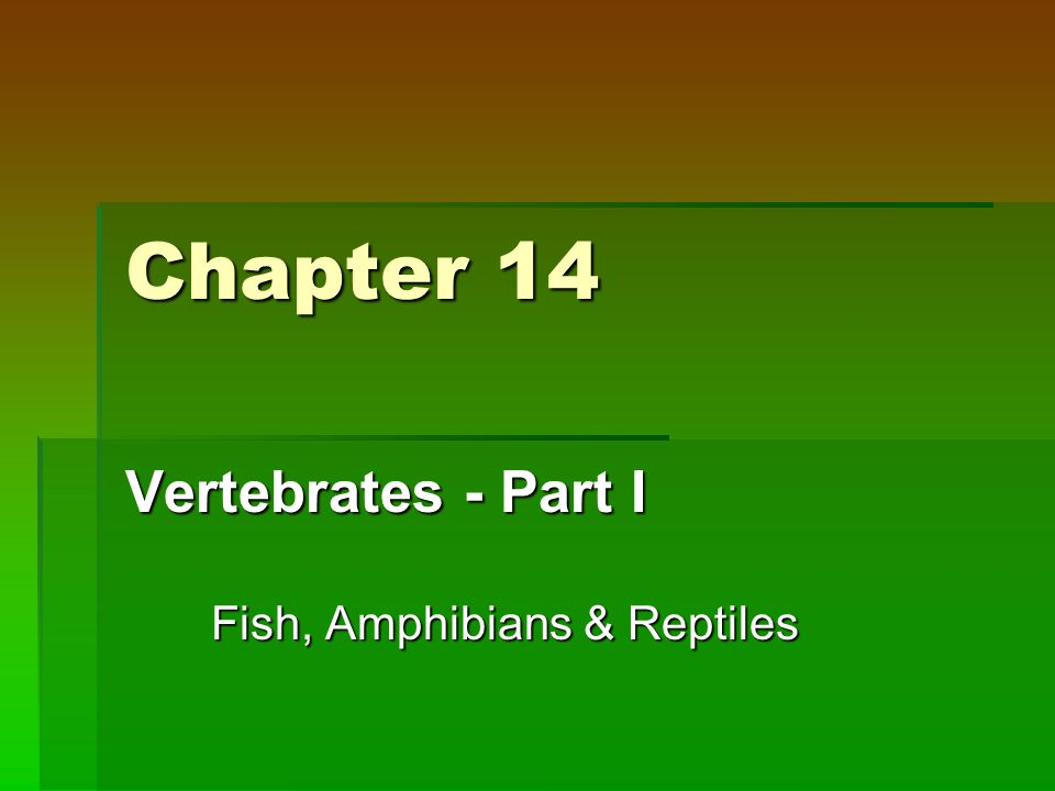 Chapter 14 Vertebrates - Part I Fish, Amphibians & Reptiles