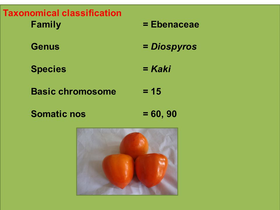 Taxonomical classification Family= Ebenaceae Genus= Diospyros Species= Kaki Basic chromosome= 15 Somatic nos= 60, 90