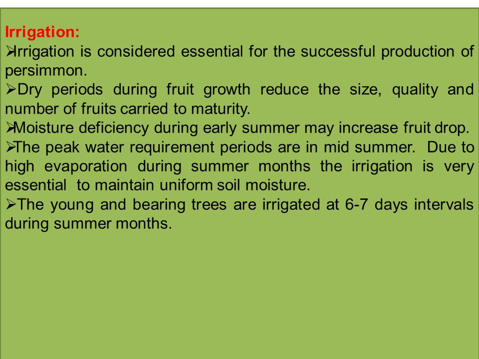 Irrigation:  Irrigation is considered essential for the successful production of persimmon.  Dry periods during fruit growth reduce the size, qualit