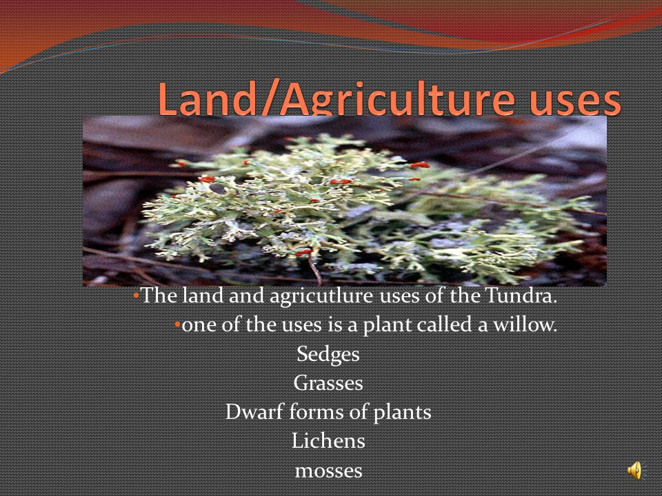 The land and agricutlure uses of the Tundra.one of the uses is a plant called a willow.