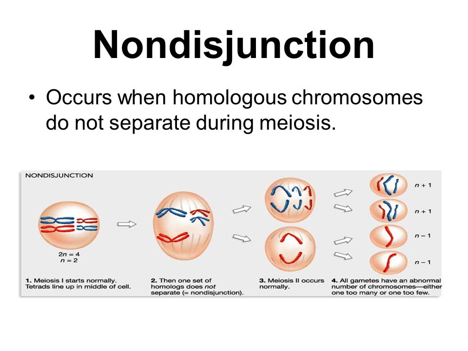 Nondisjunction Occurs when homologous chromosomes do not separate during meiosis.