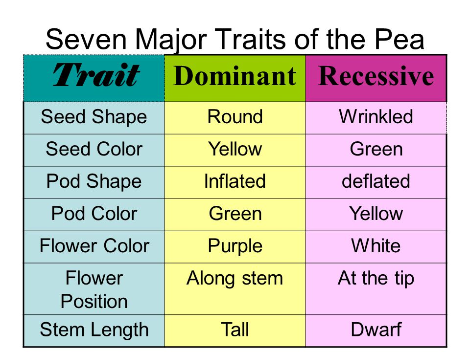 Seven Major Traits of the Pea Trait DominantRecessive Seed ShapeRoundWrinkled Seed ColorYellowGreen Pod ShapeInflateddeflated Pod ColorGreenYellow Flo