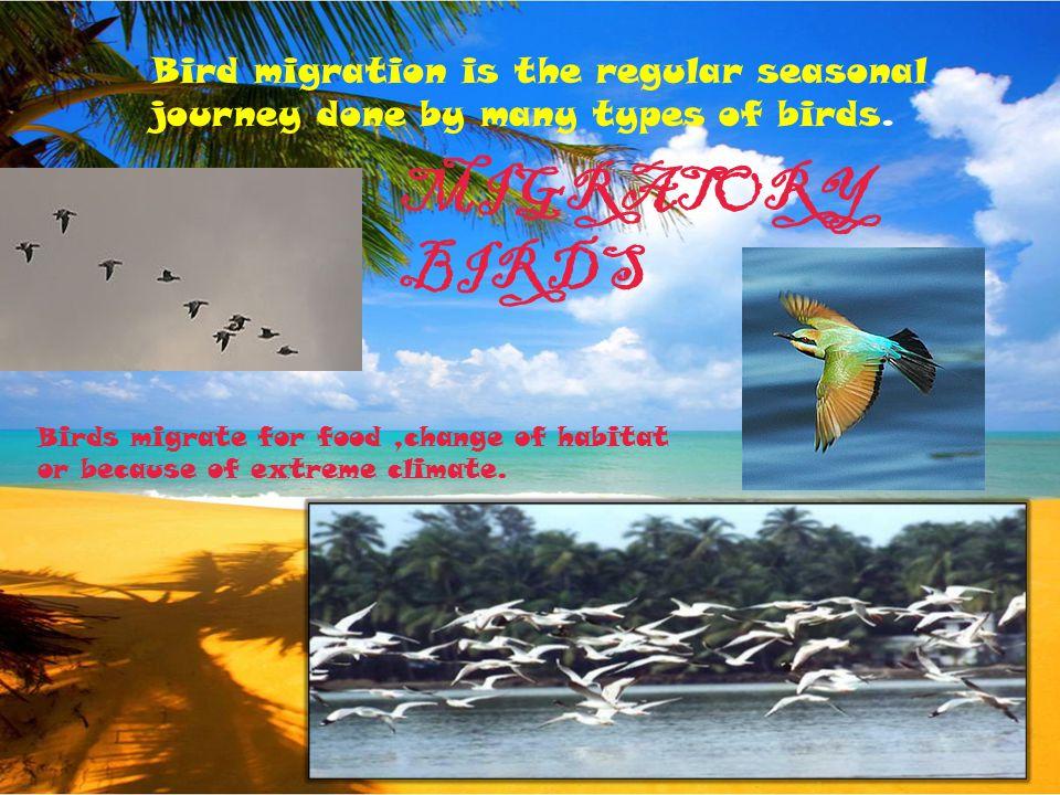 EXTINCT BIRDS They are no longer on earth because of inhuman behavior of people. MOA GREAT AUK DODO PASSENGER PIGEON