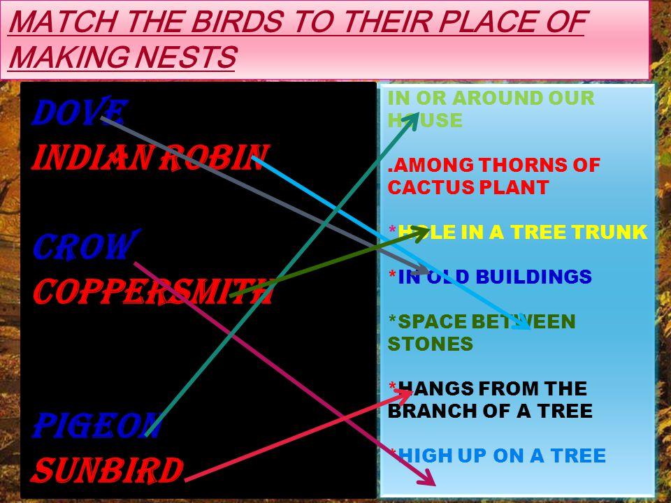 SOME COMMON BIRDS SPARROW SUNBIRD INDIAN ROBINBARBET