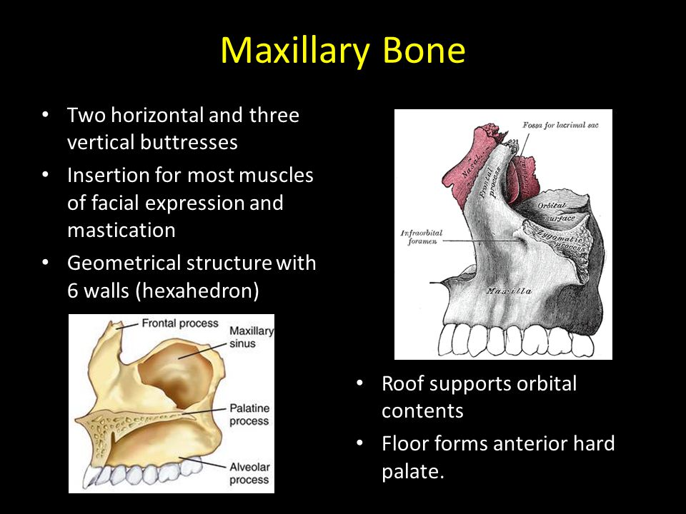 Two horizontal and three vertical buttresses Insertion for most muscles of facial expression and mastication Geometrical structure with 6 walls (hexahedron) Roof supports orbital contents Floor forms anterior hard palate.