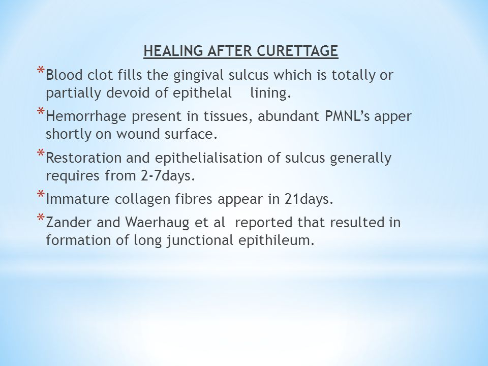 HEALING AFTER CURETTAGE * Blood clot fills the gingival sulcus which is totally or partially devoid of epithelal lining. * Hemorrhage present in tissu