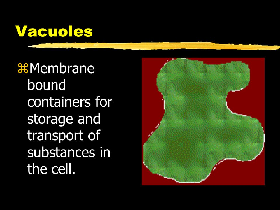 Vacuoles zMembrane bound containers for storage and transport of substances in the cell.