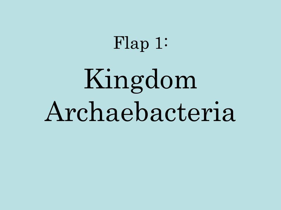 Flap 1: Kingdom Archaebacteria