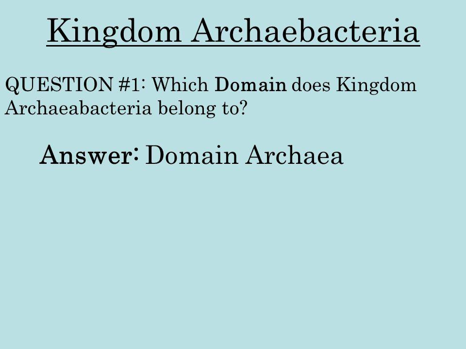 Kingdom Archaebacteria Answer: Domain Archaea QUESTION #1: Which Domain does Kingdom Archaeabacteria belong to?