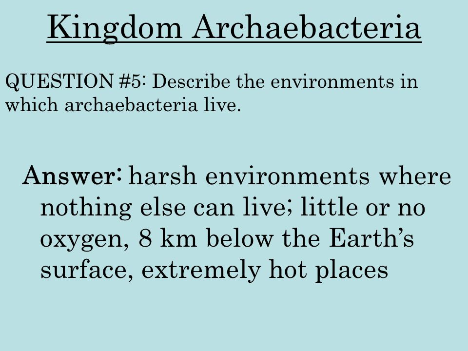 Kingdom Archaebacteria Answer: harsh environments where nothing else can live; little or no oxygen, 8 km below the Earth's surface, extremely hot plac