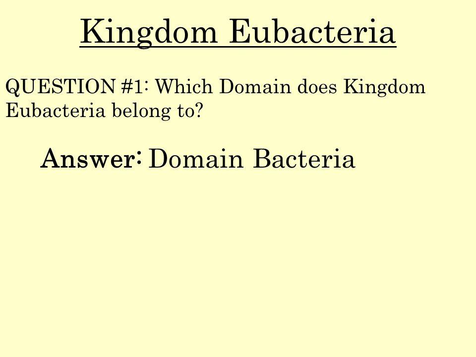 Kingdom Eubacteria Answer: Domain Bacteria QUESTION #1: Which Domain does Kingdom Eubacteria belong to?