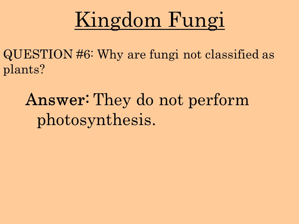 Kingdom Fungi Answer: They do not perform photosynthesis. QUESTION #6: Why are fungi not classified as plants?