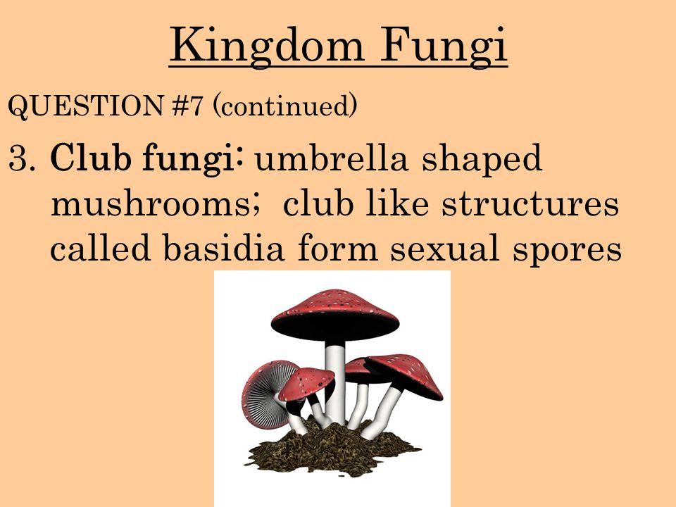 Kingdom Fungi 3. Club fungi: umbrella shaped mushrooms; club like structures called basidia form sexual spores QUESTION #7 (continued)