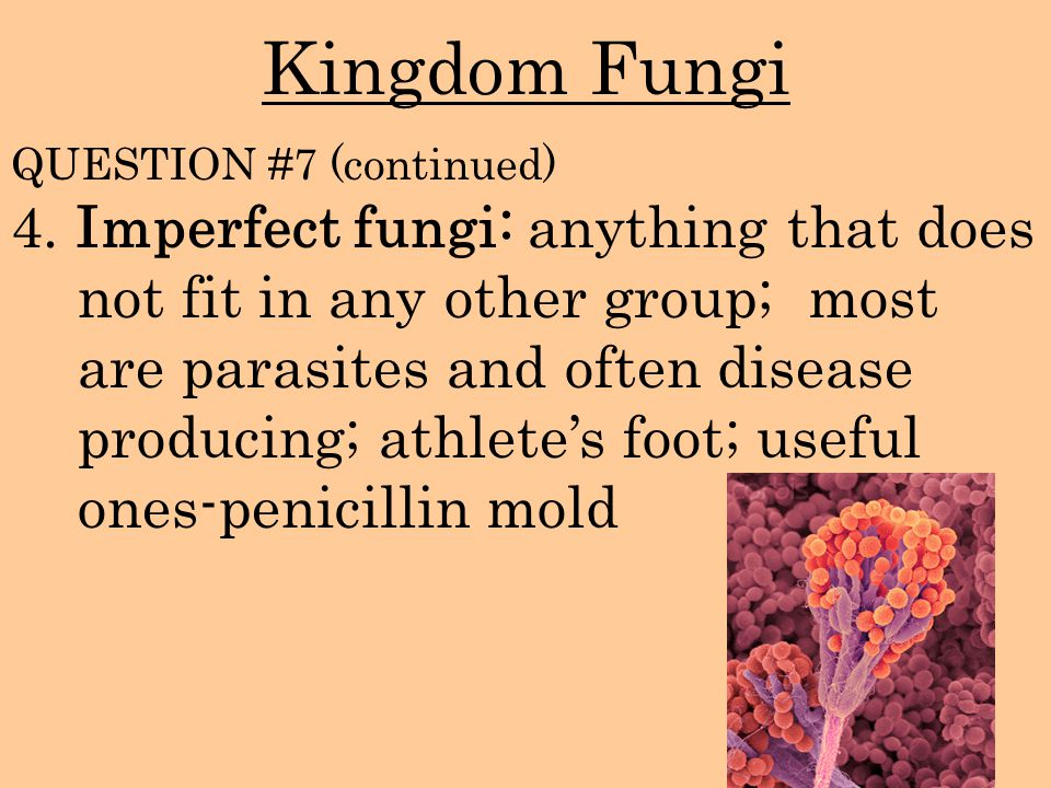 Kingdom Fungi 4. Imperfect fungi: anything that does not fit in any other group; most are parasites and often disease producing; athlete's foot; usefu