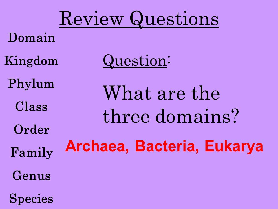 Review Questions Domain Kingdom Phylum Class Order Family Genus Species Question: What are the three domains? Archaea, Bacteria, Eukarya