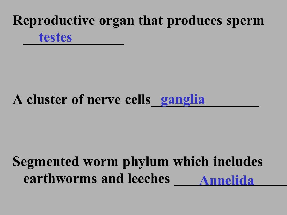 Reproductive organ that produces sperm ______________ A cluster of nerve cells_______________ Segmented worm phylum which includes earthworms and leec