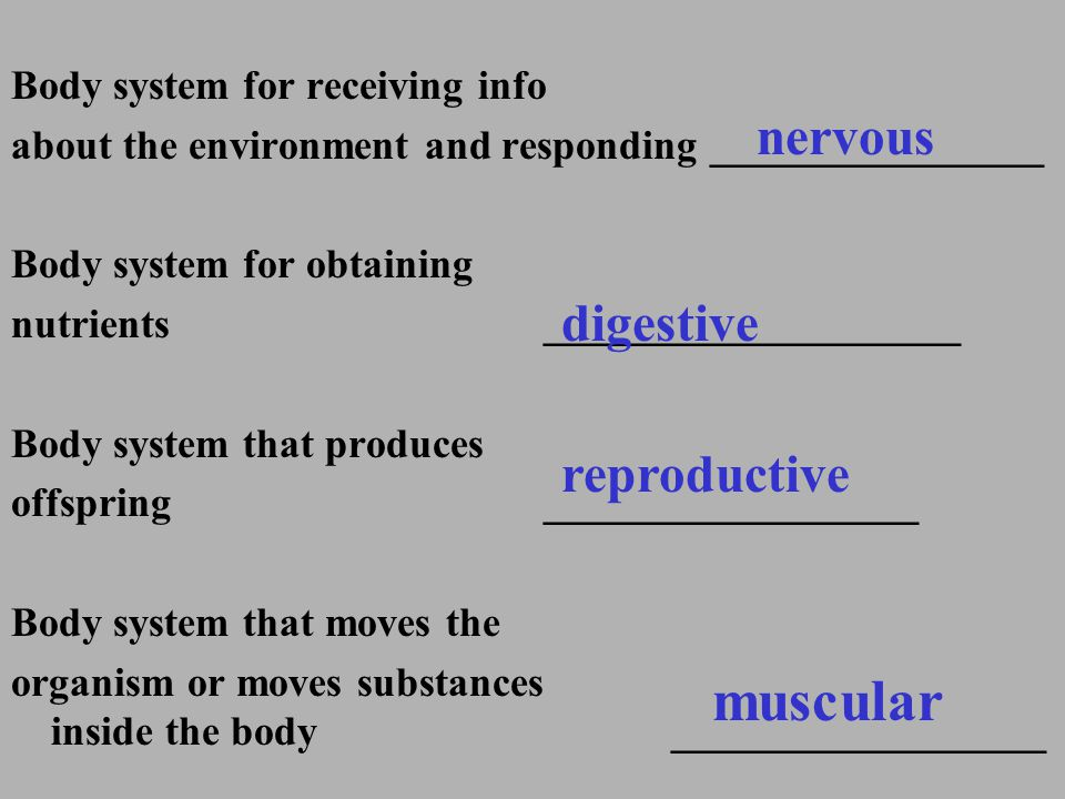 Body system for receiving info about the environment and responding ________________ Body system for obtaining nutrients ____________________ Body sys