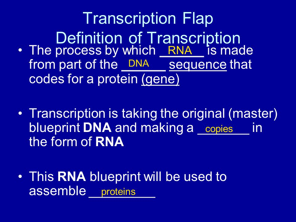 Transcription Flap Definition of Transcription The process by which ______ is made from part of the ______ sequence that codes for a protein (gene) Transcription is taking the original (master) blueprint DNA and making a _______ in the form of RNA This RNA blueprint will be used to assemble _________ RNA DNA copies proteins