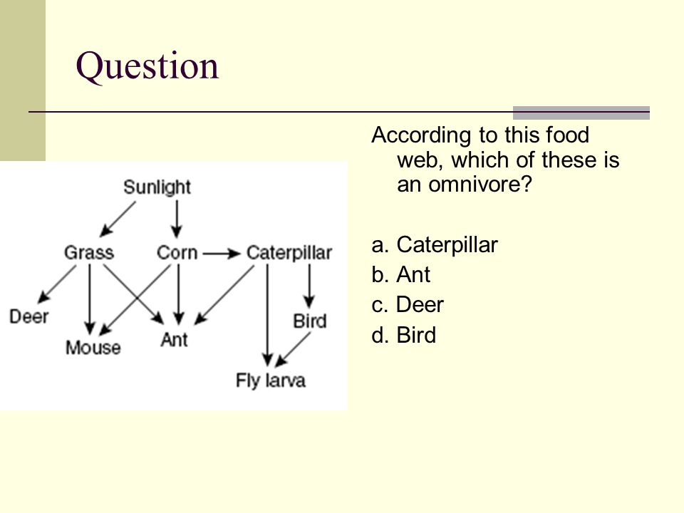 Question According to this food web, which of these is an omnivore.