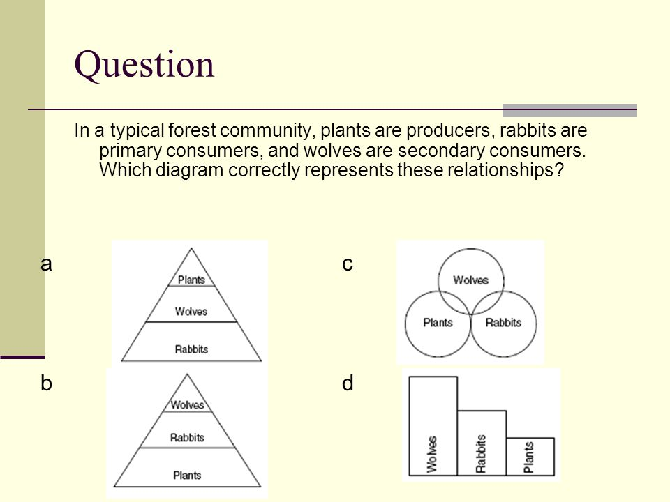 Question In a typical forest community, plants are producers, rabbits are primary consumers, and wolves are secondary consumers.