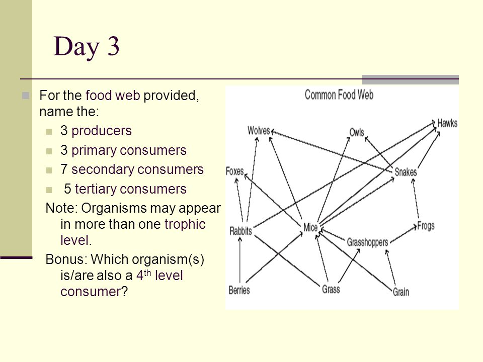Day 3 For the food web provided, name the: 3 producers 3 primary consumers 7 secondary consumers 5 tertiary consumers Note: Organisms may appear in more than one trophic level.